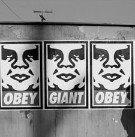 [Imagem: obey.jpg?w=135]